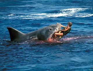 shark-attack-792816
