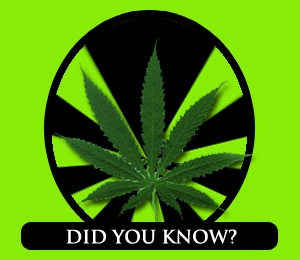 Marijuana-Facts-and-Statistics