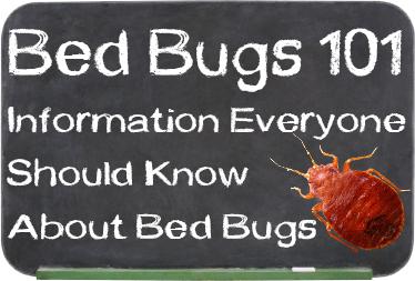 bed-bugs-101-chalkboard