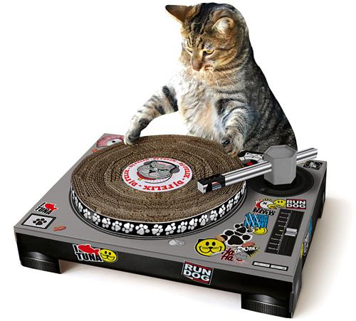 cat_scratch