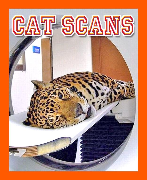 cat_scan leopard