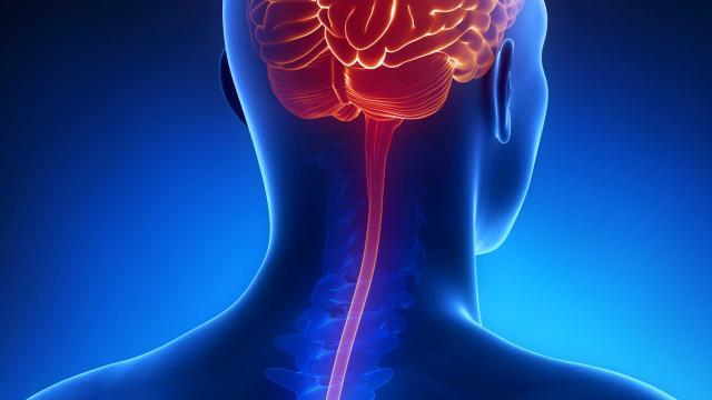 meningitiscord